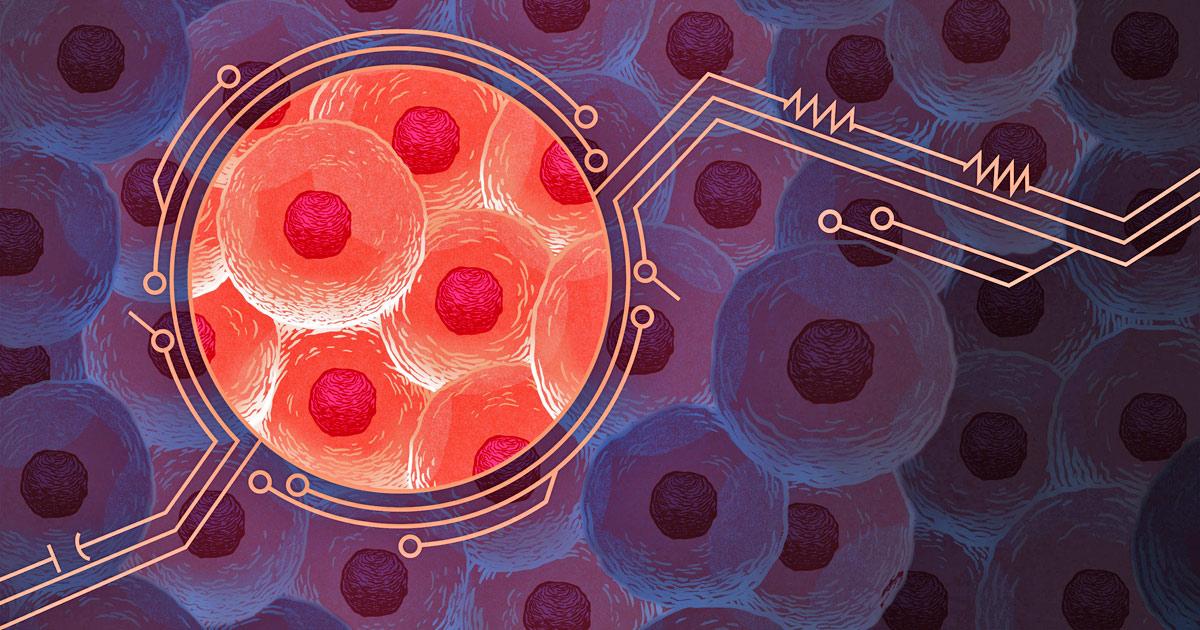Sistema Inmune Principios